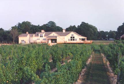 vineyards4